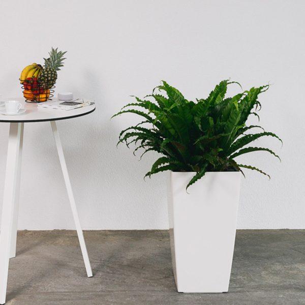 Pflanzengefaess-lechuza-cubico-40-kuehnlewaiko